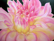 Beautiful painting of pink dahlia. Royalty Free Stock Image