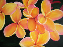 Beautiful painting of yellow plumeria. Stock Photography
