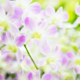 Beautiful orchid flowers in garden stock photography