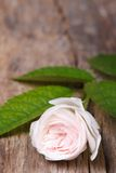 Beautiful pale pink rose on wooden board vertical Royalty Free Stock Photo