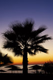 Beautiful palm against a tropical sunset Royalty Free Stock Photos