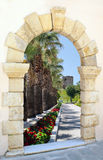 Beautiful palm alley in the park through old window Stock Photo