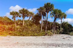 Beautiful palm beach in Florida. Blue sky and white sand Royalty Free Stock Photo