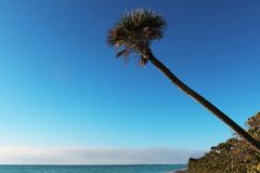 Beautiful palm beach in Florida. Blue sky and white sand Royalty Free Stock Photography