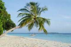 Beautiful palm beach in Maldives. Beautiful palm beach with hammock in Maldives Royalty Free Stock Photo