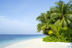 Beautiful palm beach in Maldives. Beautiful tropical beach with palm trees in Maldives Royalty Free Stock Photo