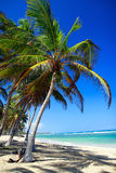Beautiful palm on caribbean sea Stock Photo