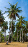 Beautiful palm forest Stock Photo