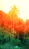 The beautiful palm forest Stock Photography