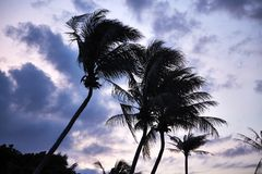 Beautiful palm fronds in the wind royalty free stock photo