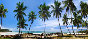 Palm groove and sea. Beautiful palm groove and turquoise tropical sea. Panoramic photo royalty free stock photography