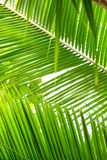 Beautiful palm leaves with background of a real jungle.  Royalty Free Stock Photos