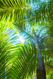 Beautiful palm leaves of tree in sunlight Stock Images