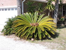 Beautiful Palm plant Stock Images
