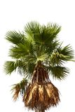 Beautiful Palm Tree Stock Images