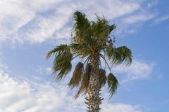 Beautiful palm tree against a blue cloudy sky stock photos