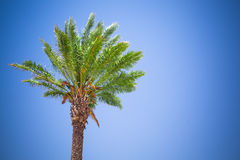 Beautiful palm tree Royalty Free Stock Photography