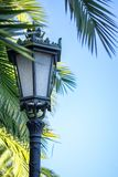 Beautiful palm tree alley with vintage lanterns in a park in autumn stock image