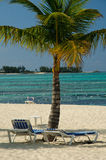 Beautiful Palm tree on Bahamas Royalty Free Stock Photo