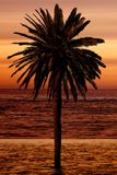 Beautiful palm tree at the beach Royalty Free Stock Images