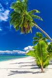 Beautiful palm tree beach on Cook Islands on a sunny day Royalty Free Stock Photo