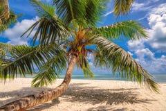 Beautiful palm tree on a beach at Praslin island, Seychelles Stock Image