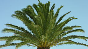 Beautiful palm tree stock footage