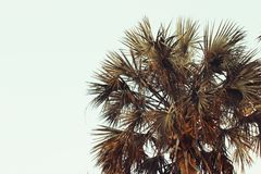 Beautiful palm tree in Florida Royalty Free Stock Photos