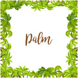 Beautiful palm tree green square frame Royalty Free Stock Images