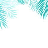 Beautiful Palm Tree Leaf  Silhouette Background Vector Stock Photos
