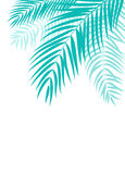 Beautiful Palm Tree Leaf  Silhouette Background Vector Royalty Free Stock Images