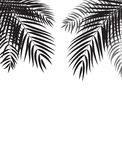 Beautiful Palm Tree Leaf  Silhouette Background Vector Royalty Free Stock Photography