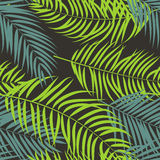 Beautiful Palm Tree Leaf  Silhouette Background Vector Stock Image