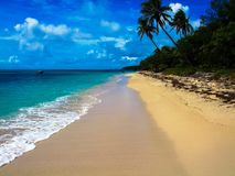 A beautiful palm tree lined beach in Fiji Stock Photo