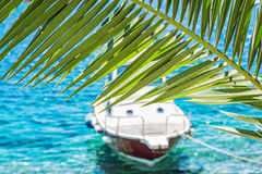 Beautiful palm tree and little boat in Maslinica, Solta island, Stock Photos