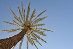 Beautiful palm tree over blue summer sky Stock Photography