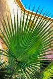 Beautiful palm tree in the sunshine Royalty Free Stock Photo