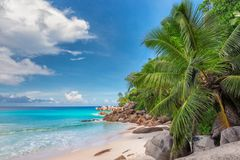 Beautiful palm tree in tropical beach. stock images