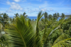 Beautiful palm tree view over Mantaray Island, Fiji. A beautiful palm tree view over Mantaray Island, Fiji Royalty Free Stock Photography