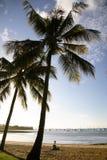 Beautiful palm trees. Silhouette of palm trees on Whitsunday beach - Australia Royalty Free Stock Image