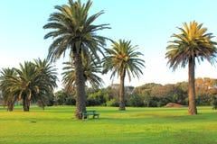 Beautiful palm trees Stock Image