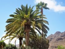 Palm trees at Mogan, Gran Canaria Royalty Free Stock Photos