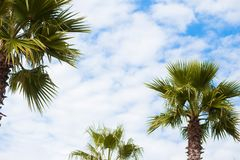 Beautiful palm trees on blue sky background stock photos