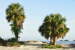 Beautiful palm trees Royalty Free Stock Image