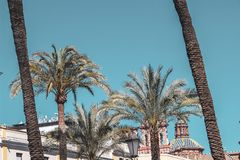 Beautiful palm trees in clear blue sky stock images