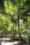 Beautiful palm trees on the coast of Anse Lazio Stock Photos
