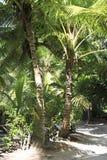 Beautiful palm trees on the coast of Anse Lazio Royalty Free Stock Image