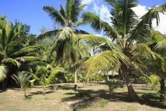 Beautiful palm trees on the coast of Anse Lazio Stock Images