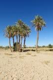 Beautiful palm trees in desert stock photos