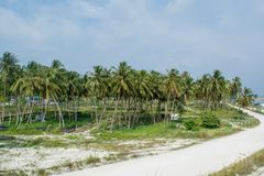 Beautiful palm trees forest near the village road at the tropical island Maamigili. In Maldives royalty free stock photos